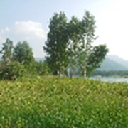 Земля 15га для туризма на Алтае фото