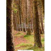 Лесоматериалы в Украине фото