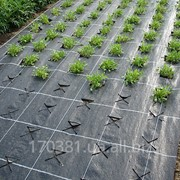 Агроткань AGROJUTEX100 г./кв.м. 1.05, 1.65, 2.10, 3.30, 4.20 и 5.25 м. фото