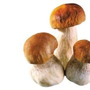 Сотрудничество сфере заготовки свежих лесных грибов фото