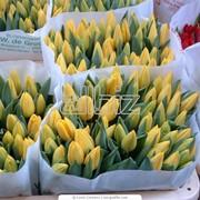 Цветы живые фото