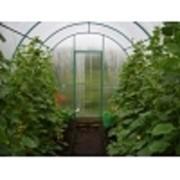 Теплица, оранжерея, тёплый огород фото