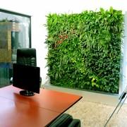 Вертикальное озеленение помещений фото
