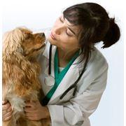 Средства ферментные ветеринарные фото