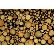 Комбинаты деревообрабатывающие фото