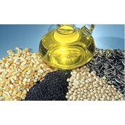 Масленичные семена фото
