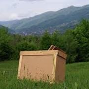 Пчелопакеты (Тара) из ДВП Закарпатье, Украина фото
