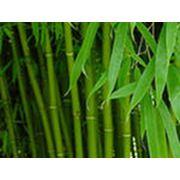Текстиль бамбуковый фото