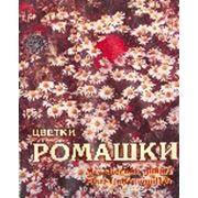 Цветки Ромашки фото
