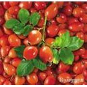 Плоды шиповника фото