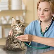 Средства дезинфицирующие для ветеринарии фото