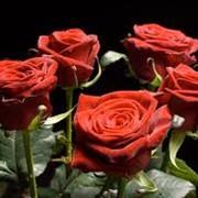 Технология получения дополнительного количества цветов розы фото