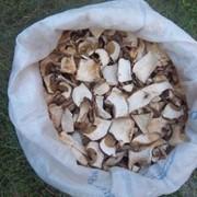 Сухі білі гриби фото