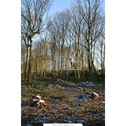 Охрана леса и лесосек фото