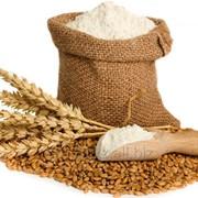 Мука пшеничная в/с. Белизна 67-68% фото