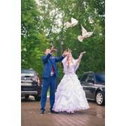 Голуби на свадьбу фото