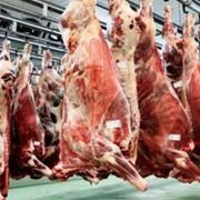 Мясо свинины, полутуши фото