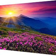 Картина на холсте 40х50 д920 фото