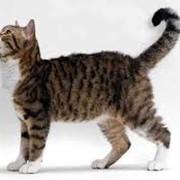 Ветеринарный препарат для кошек фото