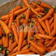 Морковь разных сортов фото