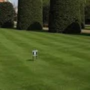 Стрижка газонов любой сложности и площади живой изгороди формирование растения фото