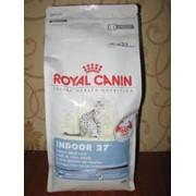 Корм для кошек Royal-Canin фото