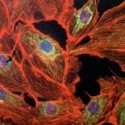 Средства для лечения онкологических заболеваний фото