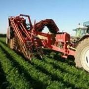 Страхование в сельском хозяйстве. фото