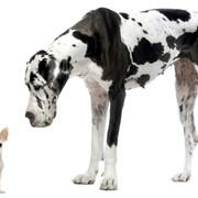 Обучение собак охране в г.Львов фото