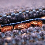 Выведение клопов, тараканов  фото