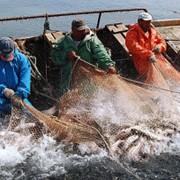 Работа на Черном море, на Дальневосточном регионе, с научно исследовательскими компаниями на Каспийском море. фото