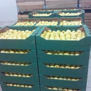 Яблоки свежие .,сухофрукты, зерно. рапс. подсолнух.соя фото
