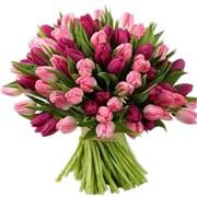 Букеты из 99-ти тюльпанов фото