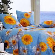 Семейный постельный комплект Б0254 фото