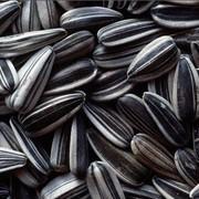 Семена подсолнечника, семечка, подсолнечник фото