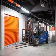 Саженцы клюквы садовой фото