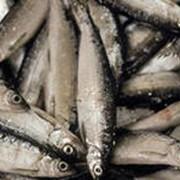 Промышленное копчение мелкой рыбы фото