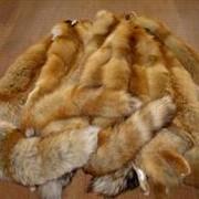 Продам:шкури лисы,желетки,шуби,учела,воротники и шапки! фото