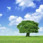 Инвентаризация объектов растительного мира (зеленых насаждений) фото