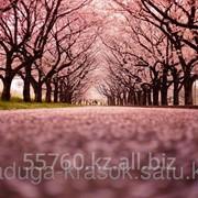 Картина стразами Цветущая аллея 40х50 см фото