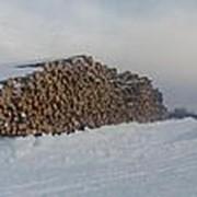 Лес кругляк Ольха диаметр от 25 до 50 см ( Воронежская область) фото