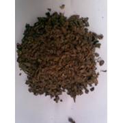 Какао крупка (nibs) фото
