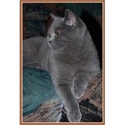 Продам подрощенного котенка фото