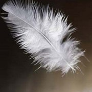 Чистка перьев и пуха фото