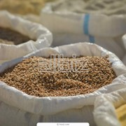 Пшеница первого класса фото