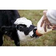 Заменитель цельного молока для телят Гарант-Милк-1 фото