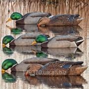 Чучело утки Avian-X Mallard Floater Back Water Mallard Duck Decoys 6pk фото