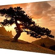 Картина на холсте 25х35 Н962 фото