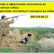 Оформление документов на охотничью собаку  фото