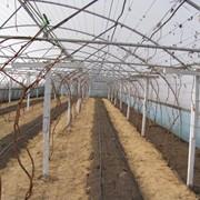 Шпалеры для винограда, столбик железобетонный для виноградарства, шпалеры для садоводство фото